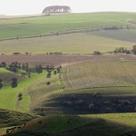The Wiltshire Downs at Cherhill